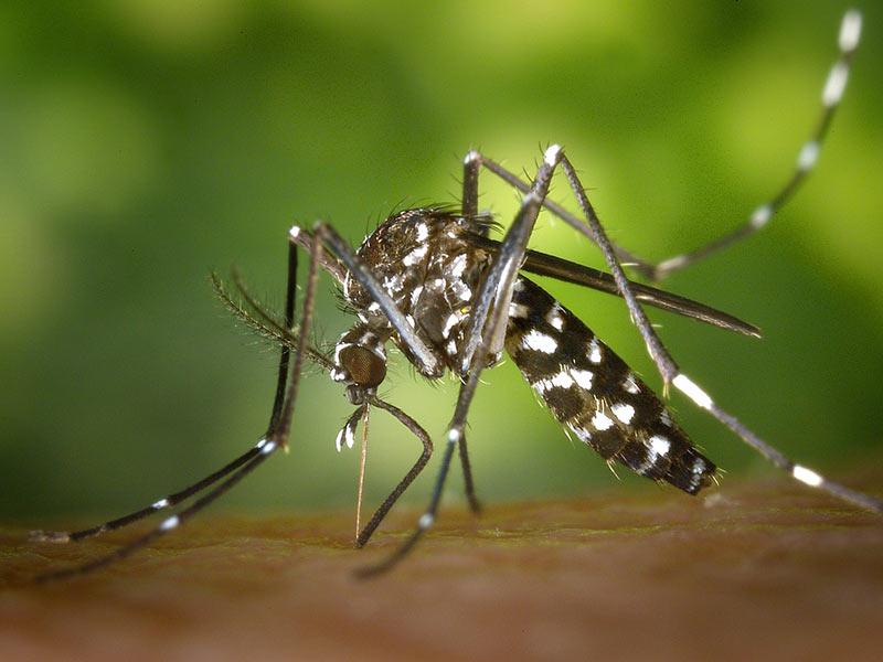 lutte moustiques et virus