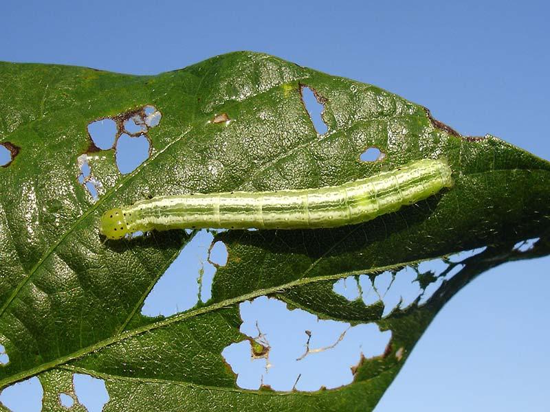 pesticides lutte contre insectes