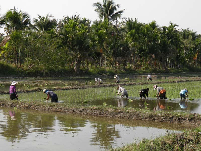 pesticides maladies des paysans