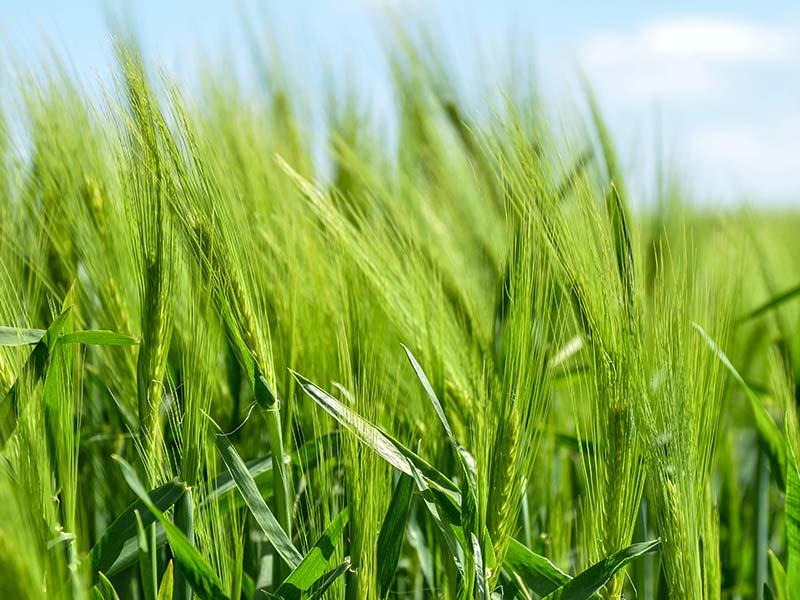 pollution par les pesticides en agriculture