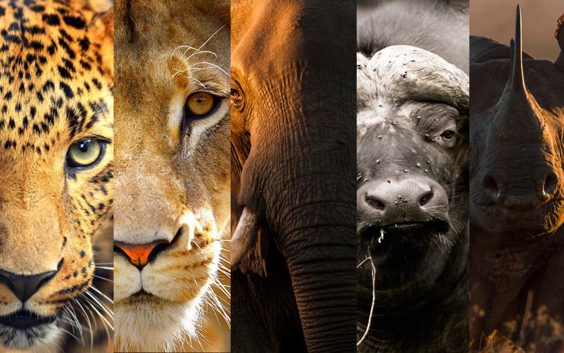 disparition des animaux
