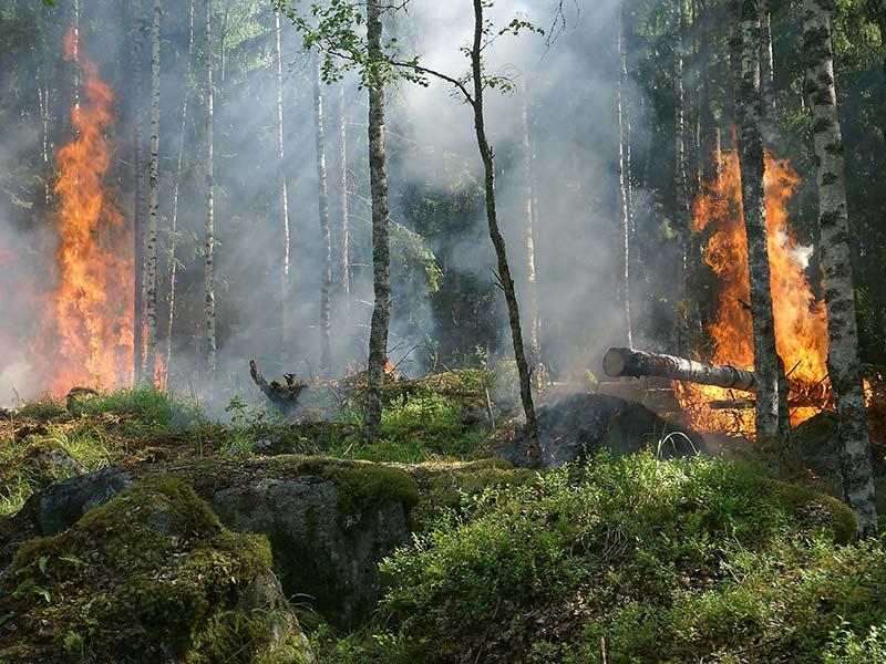 déforestation incendie