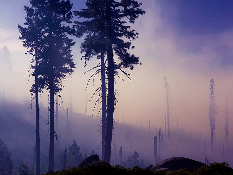 déforestation que faire