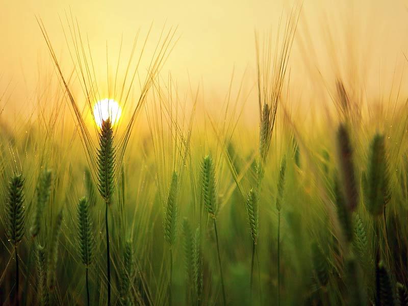 agriculture réchauffement climatique