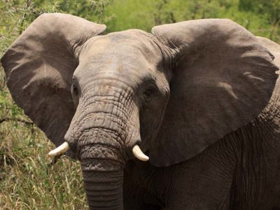 comment protéger les éléphants