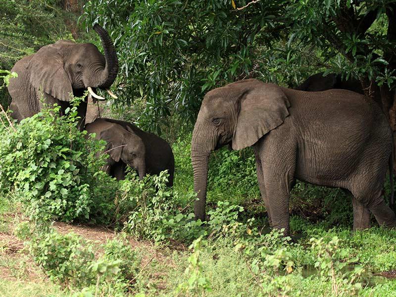 éléphants réduction habitat