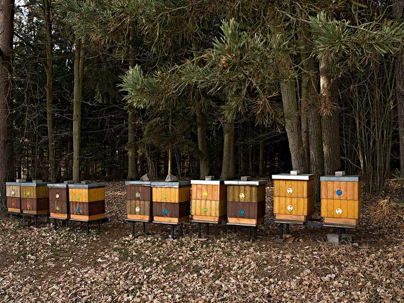 ruches pour les abeilles