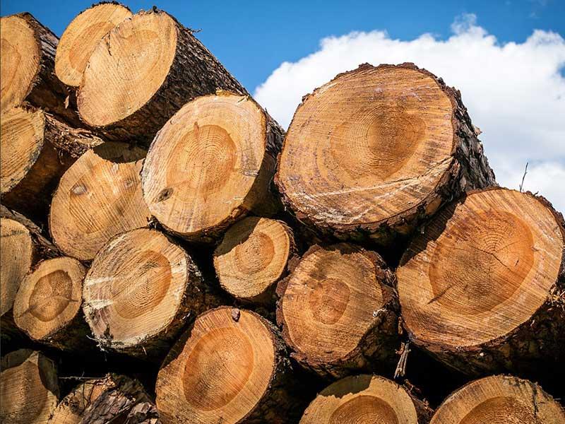énergie renouvelable : biomasse