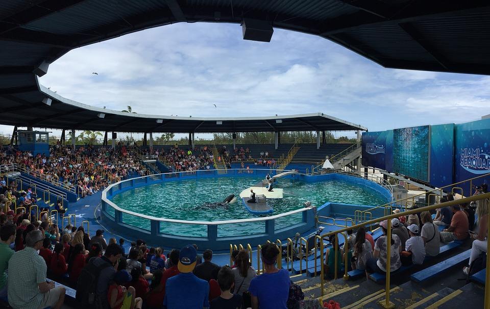 parcs-aquatiques-dauphins
