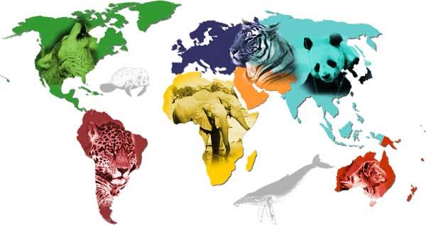 sixieme-extinction-de-masse