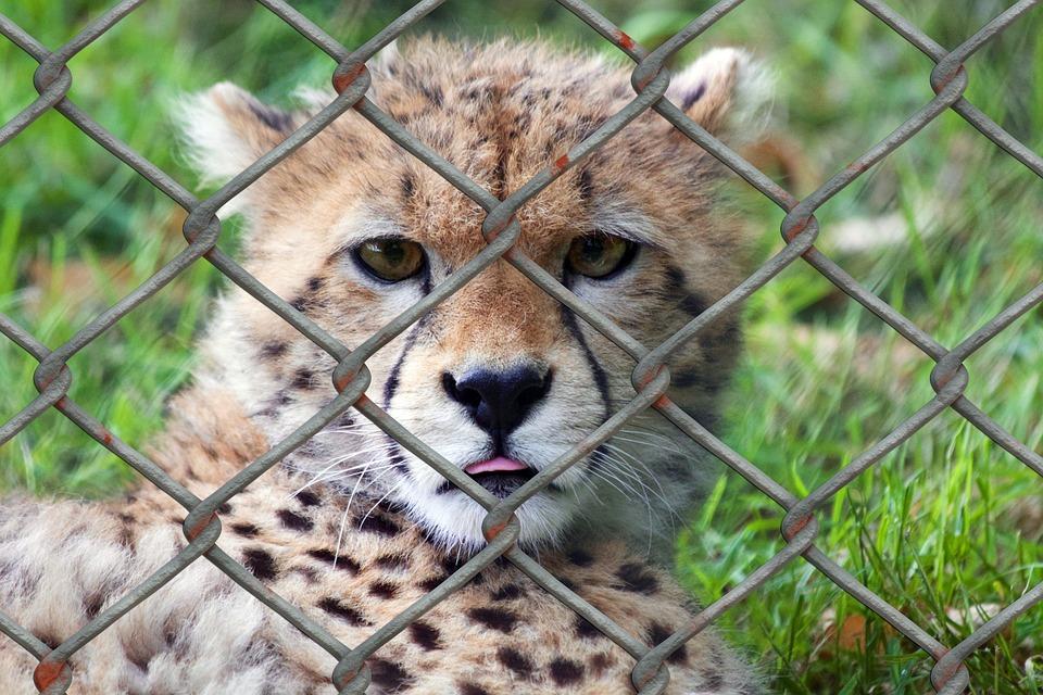zoos-parcs-animaliers