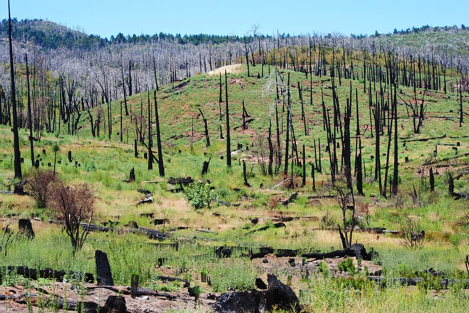 consequences-causes-incendies-forets