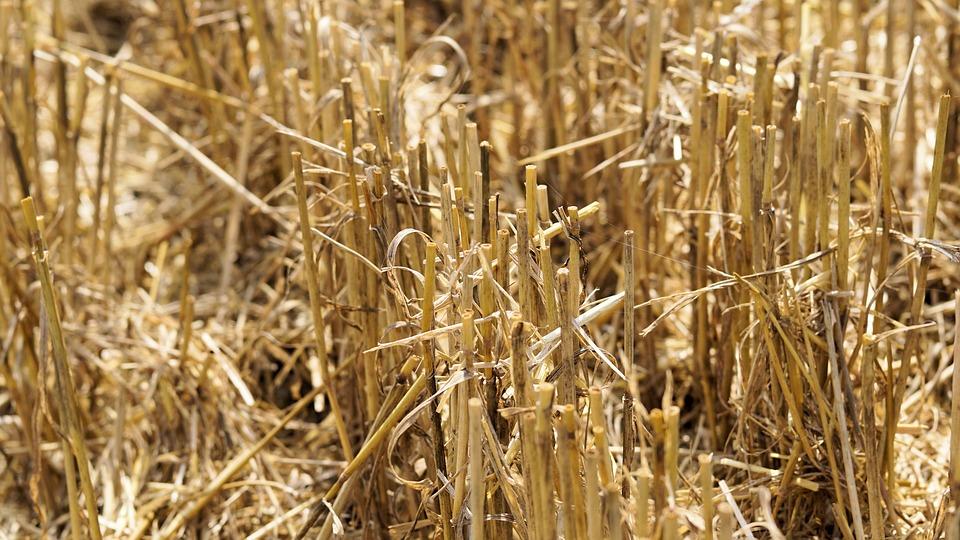 monde-agricole-cultures-intensives