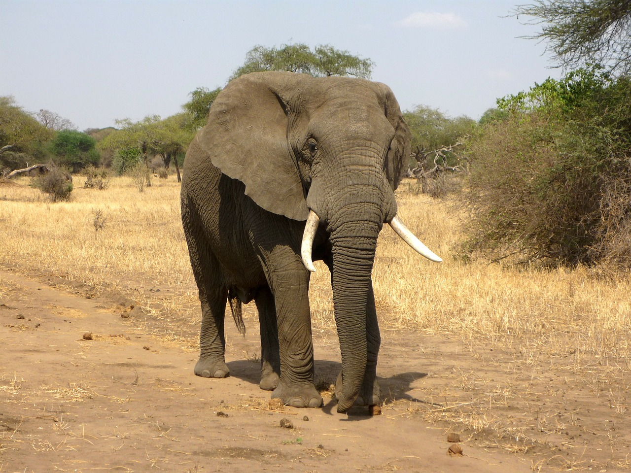 botswana-elephants-ompe