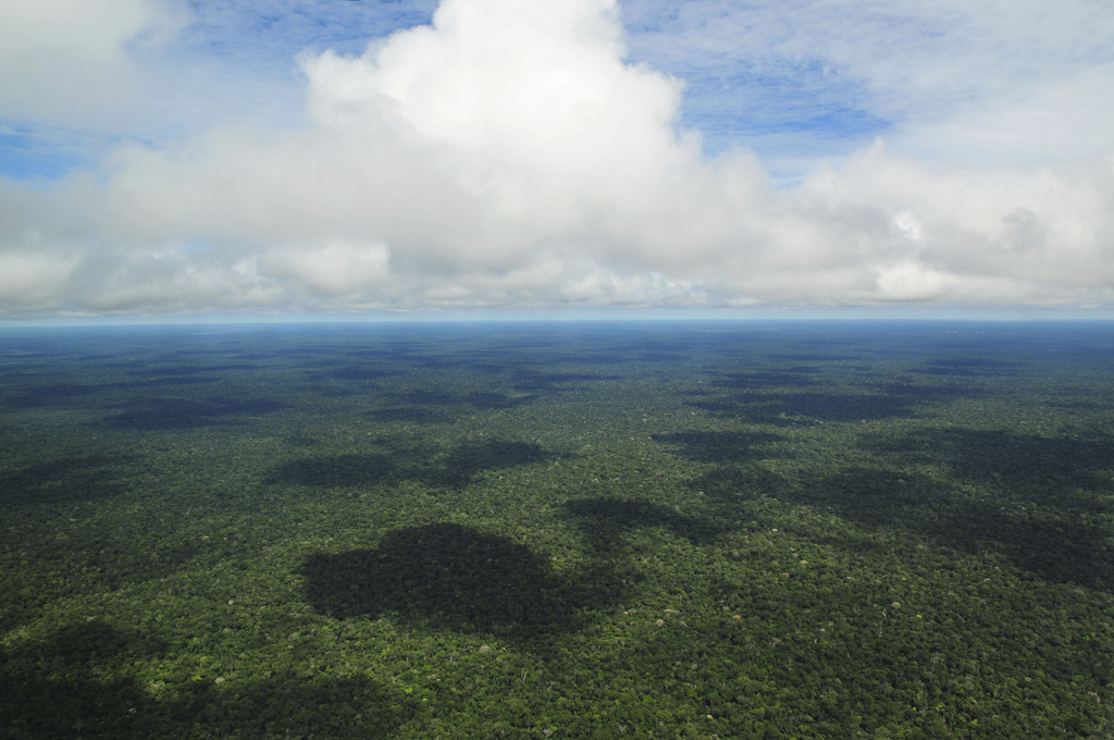 deforestation-amazonie