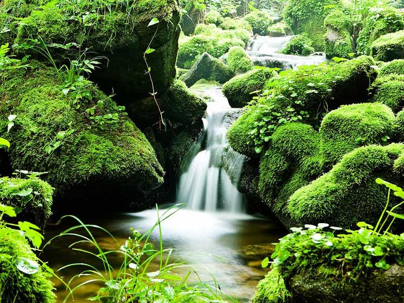 protéger l'eau : réduction déforestation