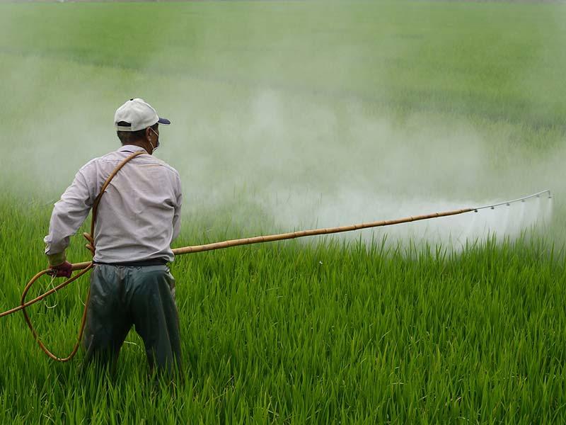 pesticides risques sur la santé