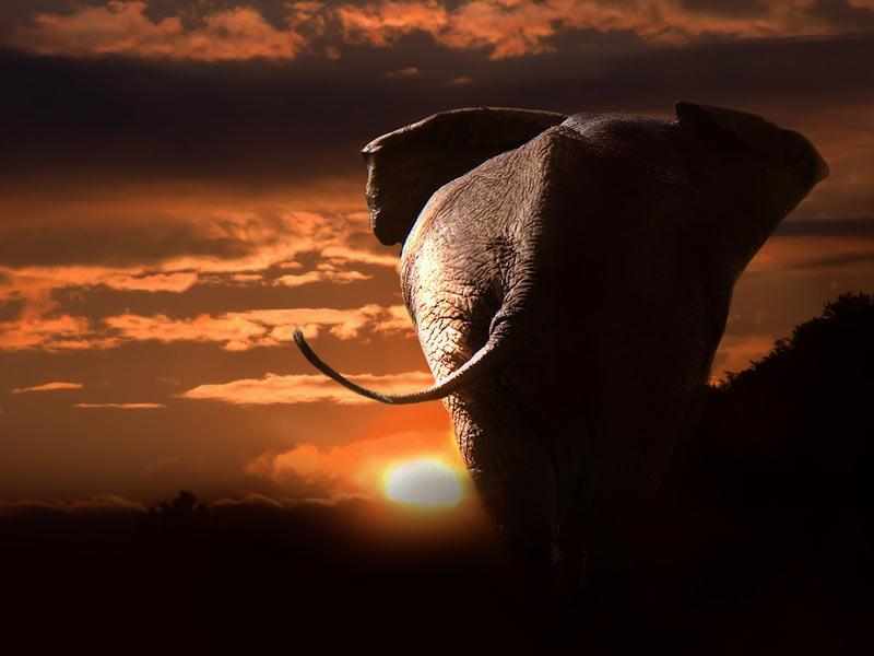 defense-animaux-afrique-destruction-habitat