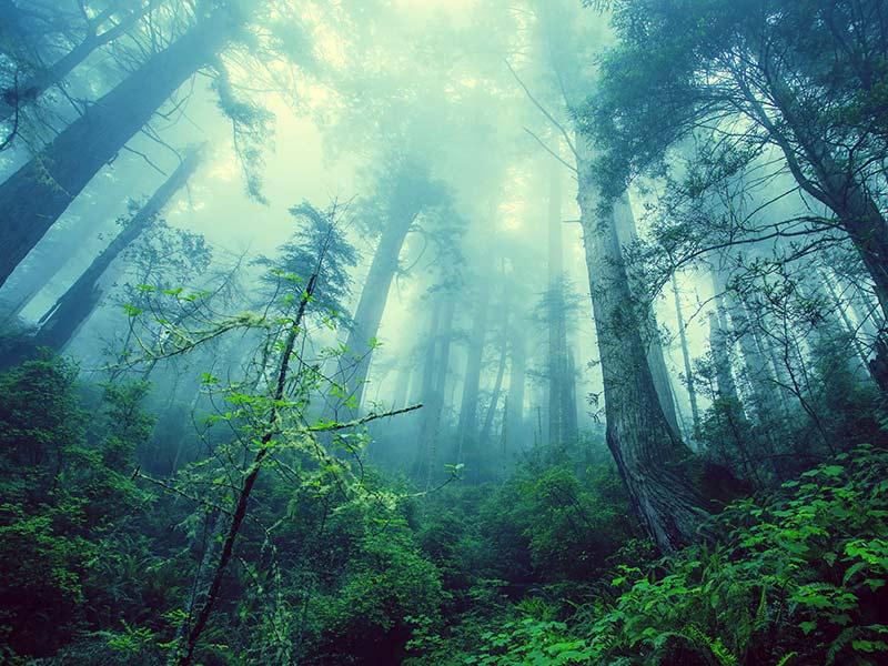 déforestation causes