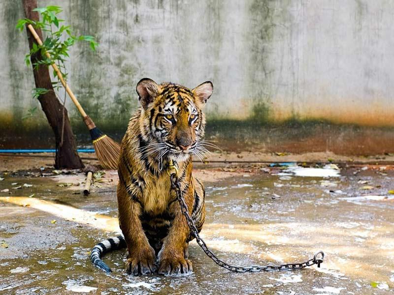 protection-faune-sauvage-medecine-asiatique