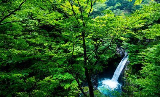 protection de la forêt