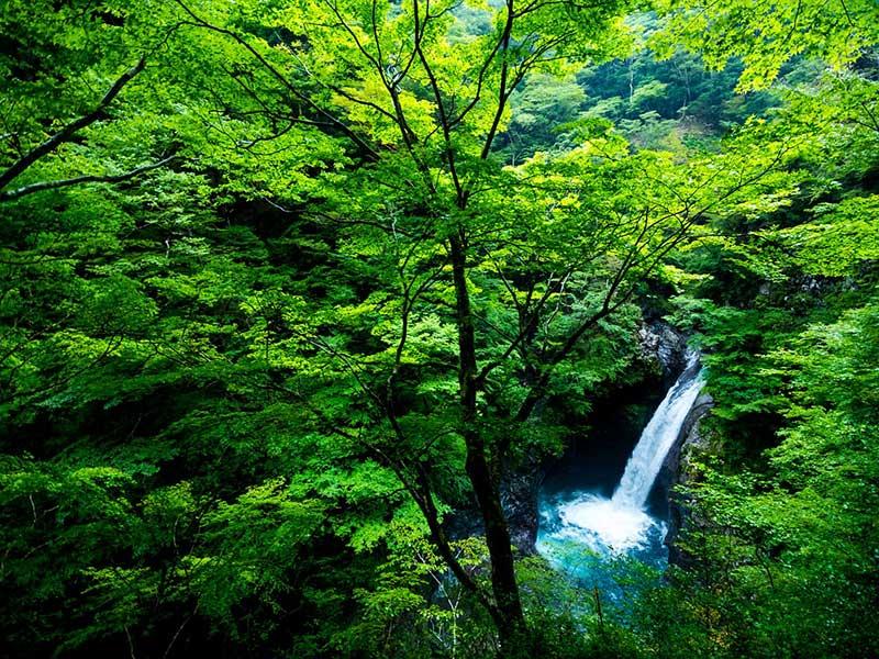 Les forêts | OMPE | Organisation Mondiale pour la Protection de l ...