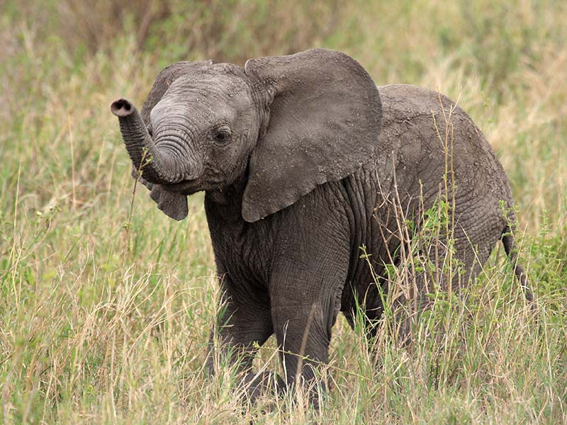 bébé éléphant à protéger