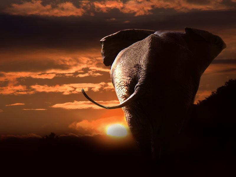 défendre éléphants