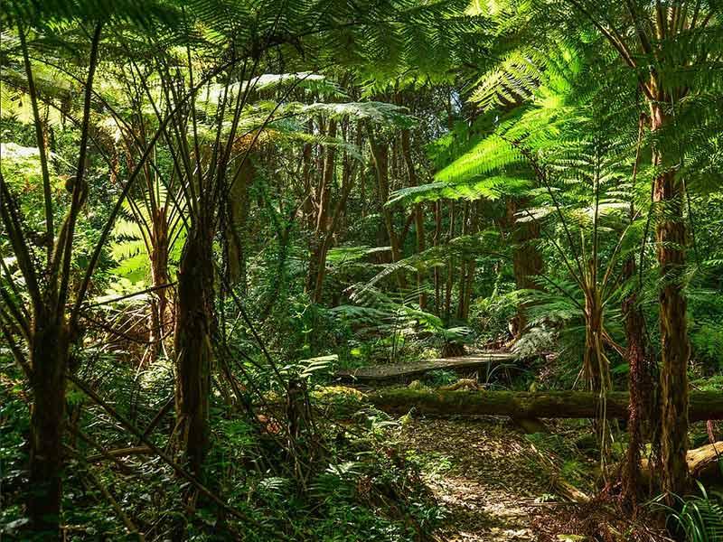 déforestation réchauffement climatique