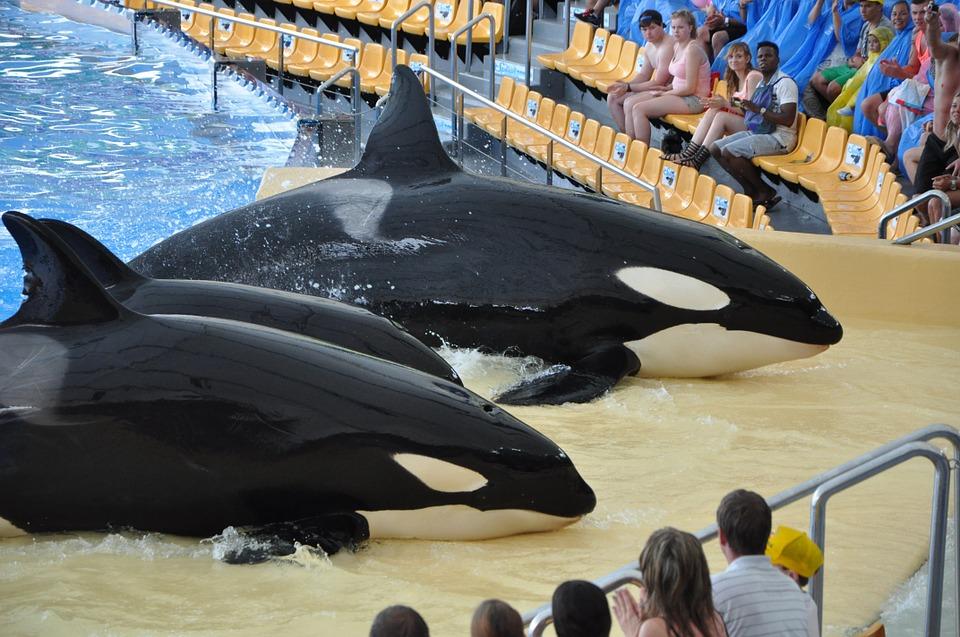 orques-captivité