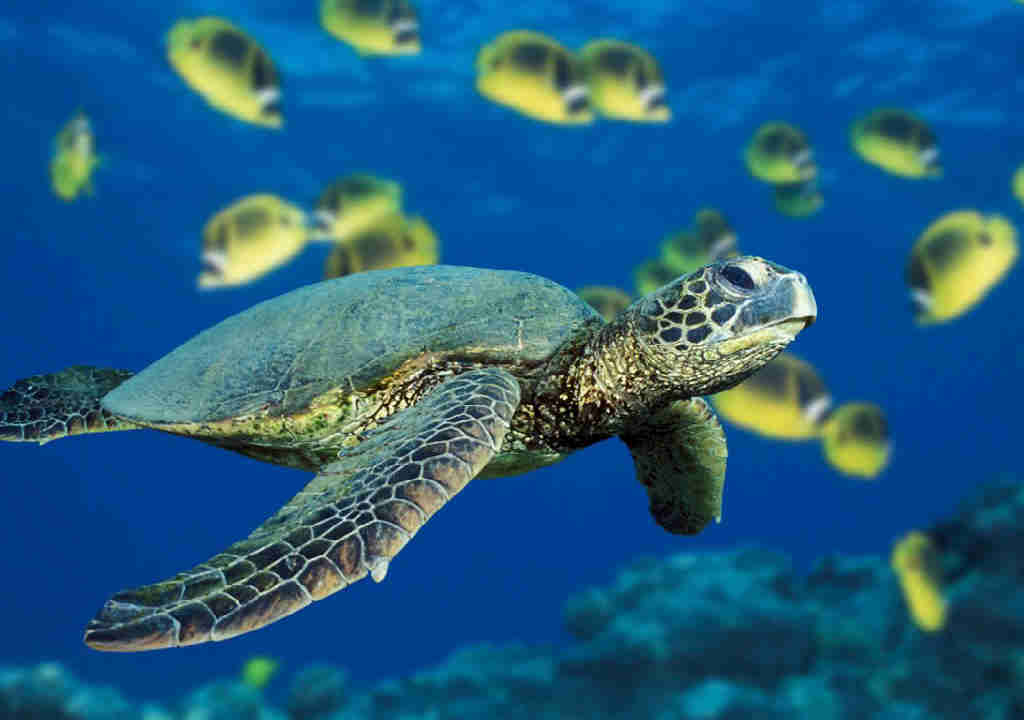 animaux-disparition-tortues