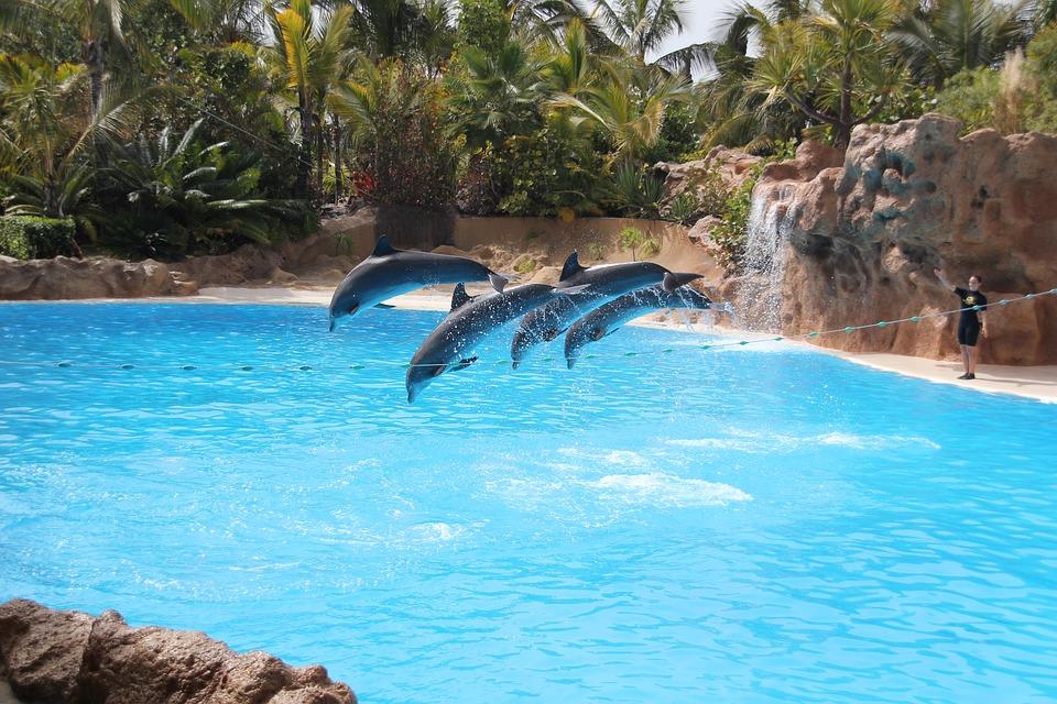 interdiction-reproduction-parcs-aquatiques