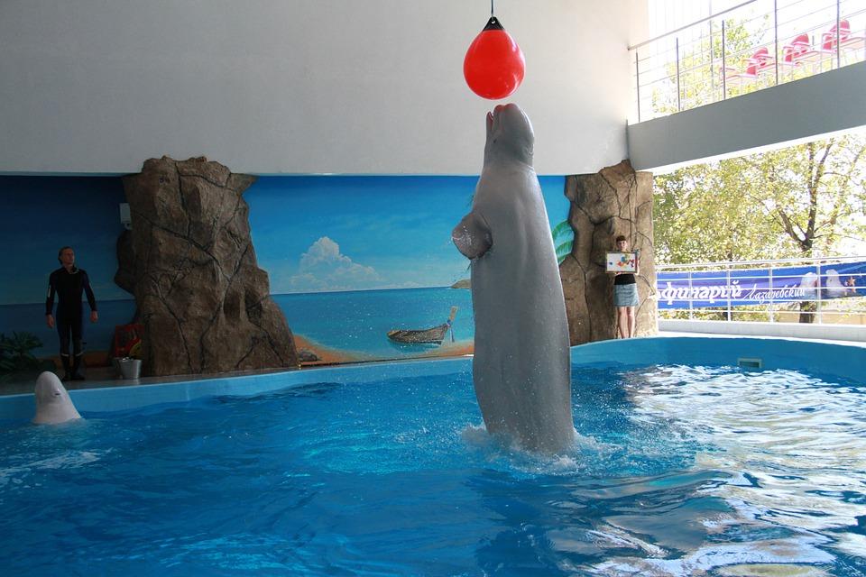 orques-parcs-aquatiques