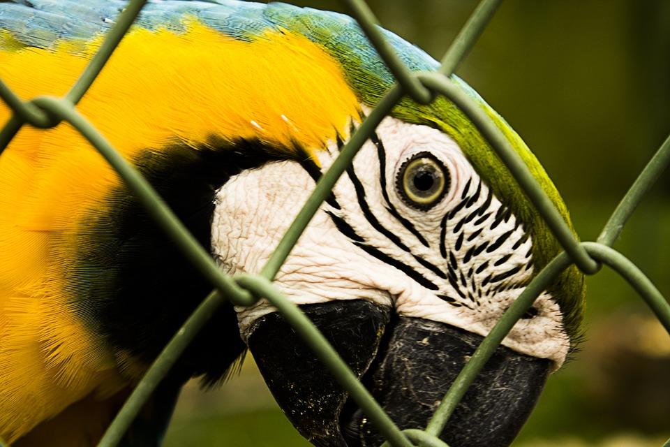trafics-animaux-perroquets