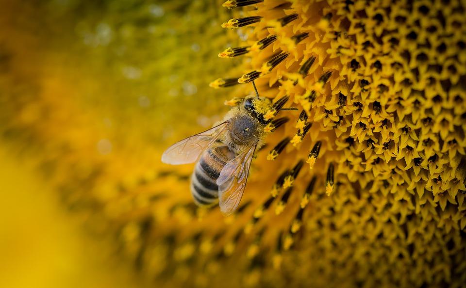 abeilles-declin-environnement