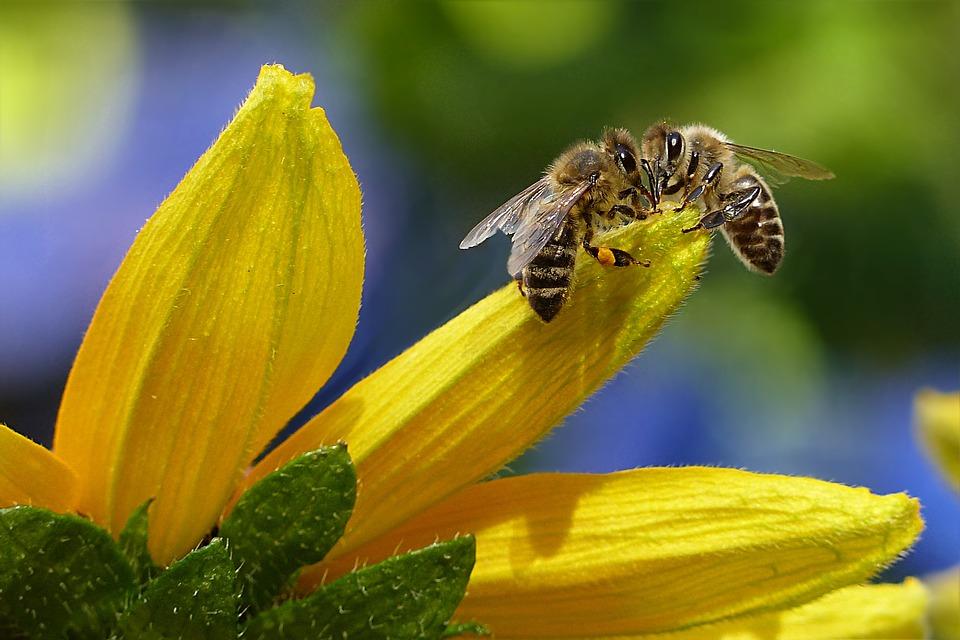 abeilles-extinction
