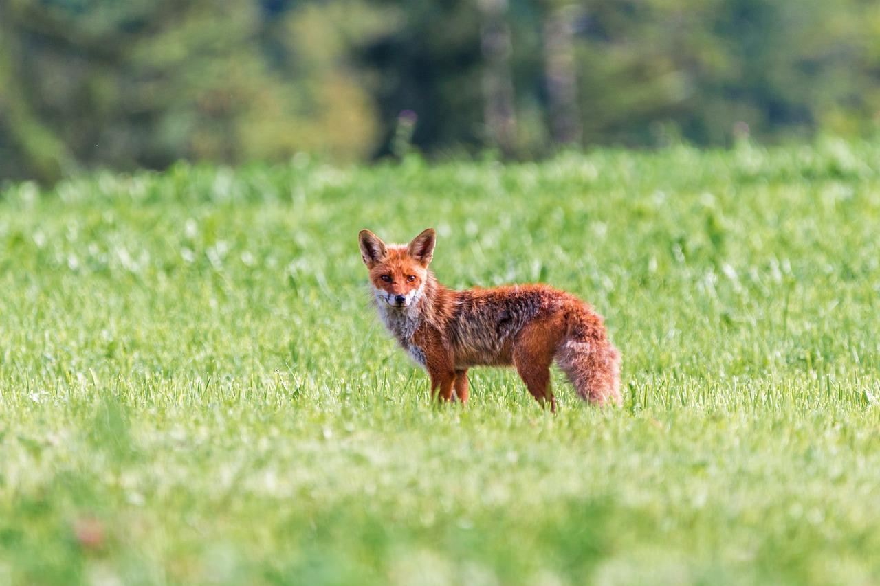baisse-biodiversite-chasseurs