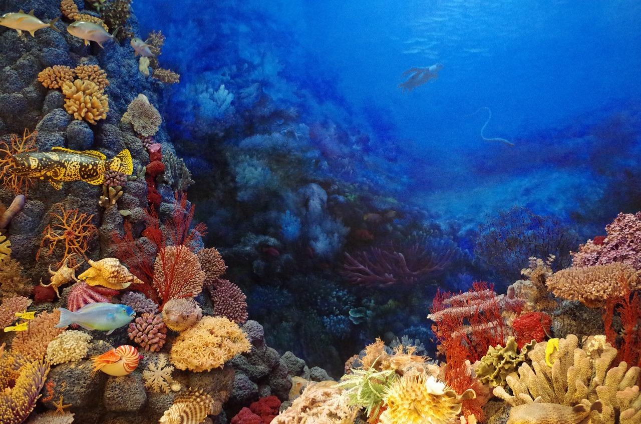 barrieres-de-corail