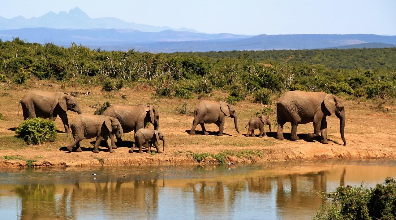 elephants-botswana-ompe
