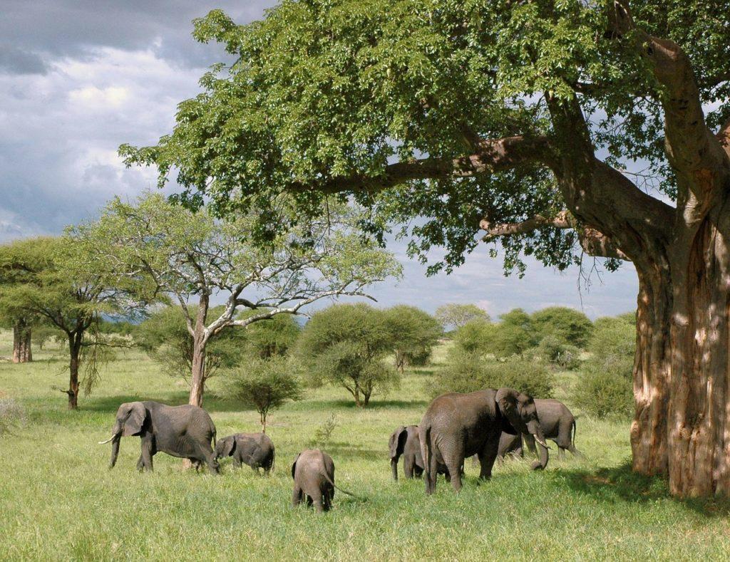 elephants-joelle-delange-ompe