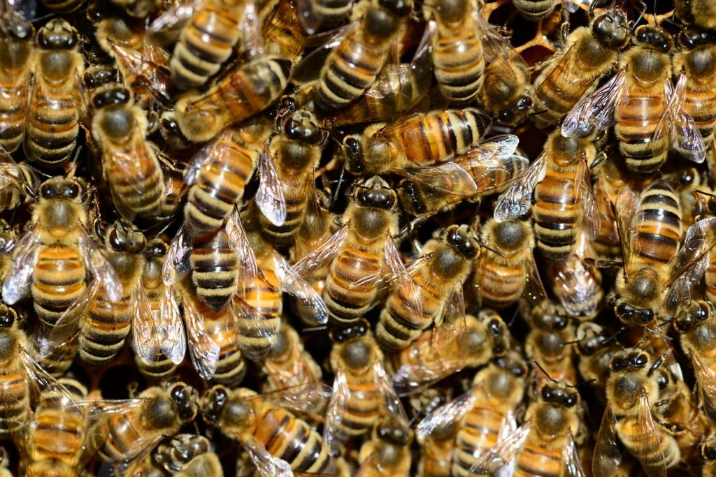 vaccin-abeilles