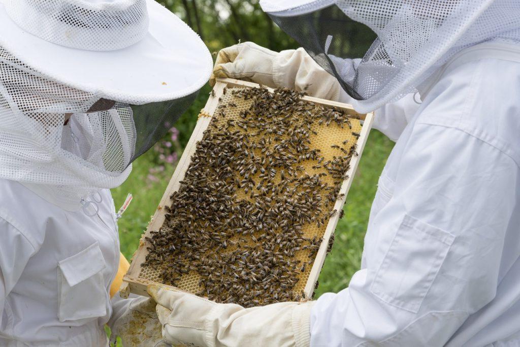 vaccin-abeilles-primebee