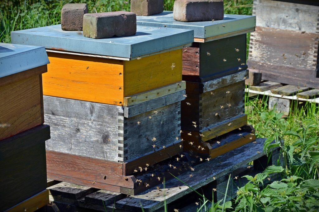 vaccin-abeilles-loque-americaine