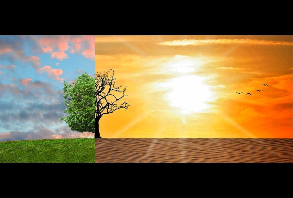 rechauffement-climatique-records-chaleur