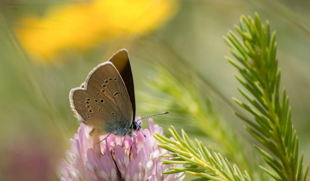 declin-biodiversite-ipbes-ompe