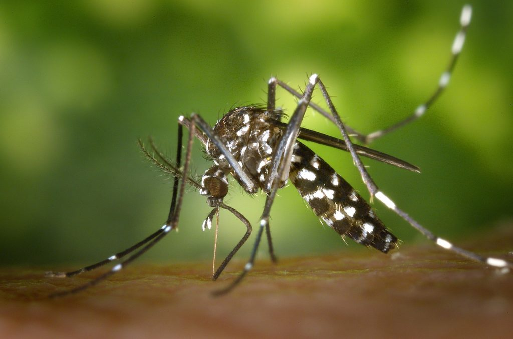 moustique-tigre-ompe
