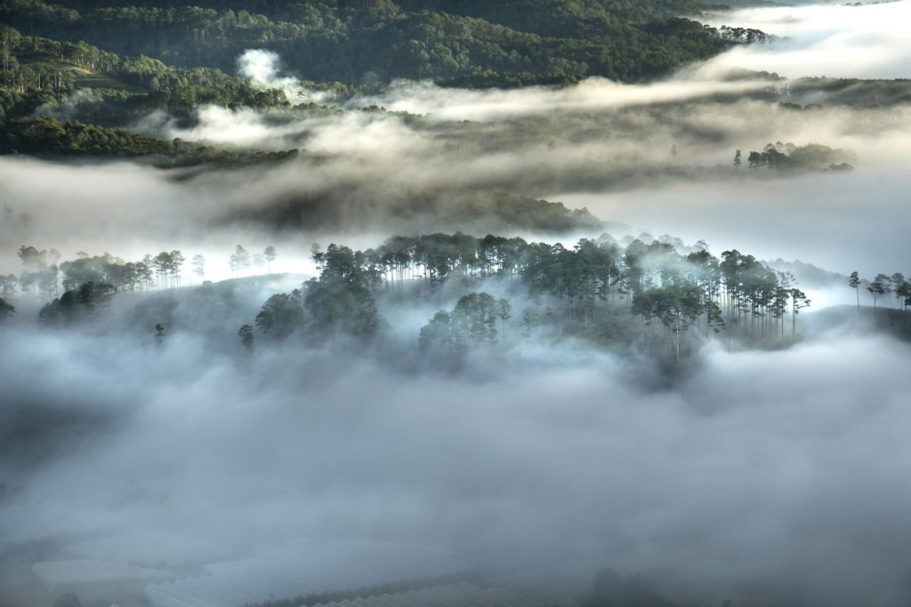 deforestation-amazonie-bresil