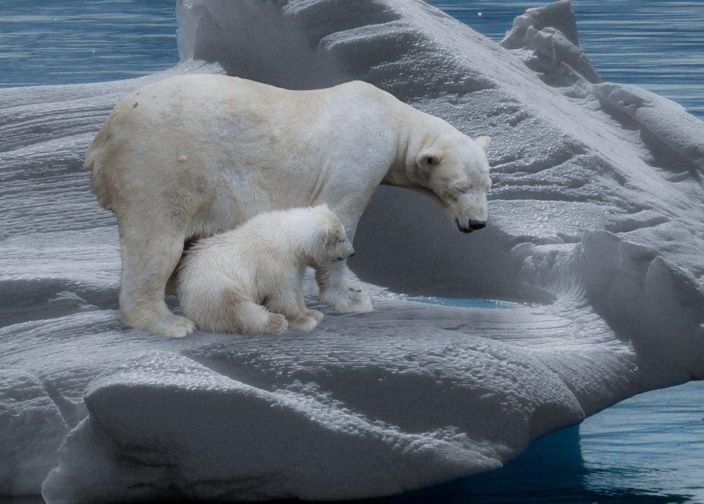 vague-chaleur-temperatures-arctique