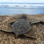 animaux-dechets-plastiques-oceans