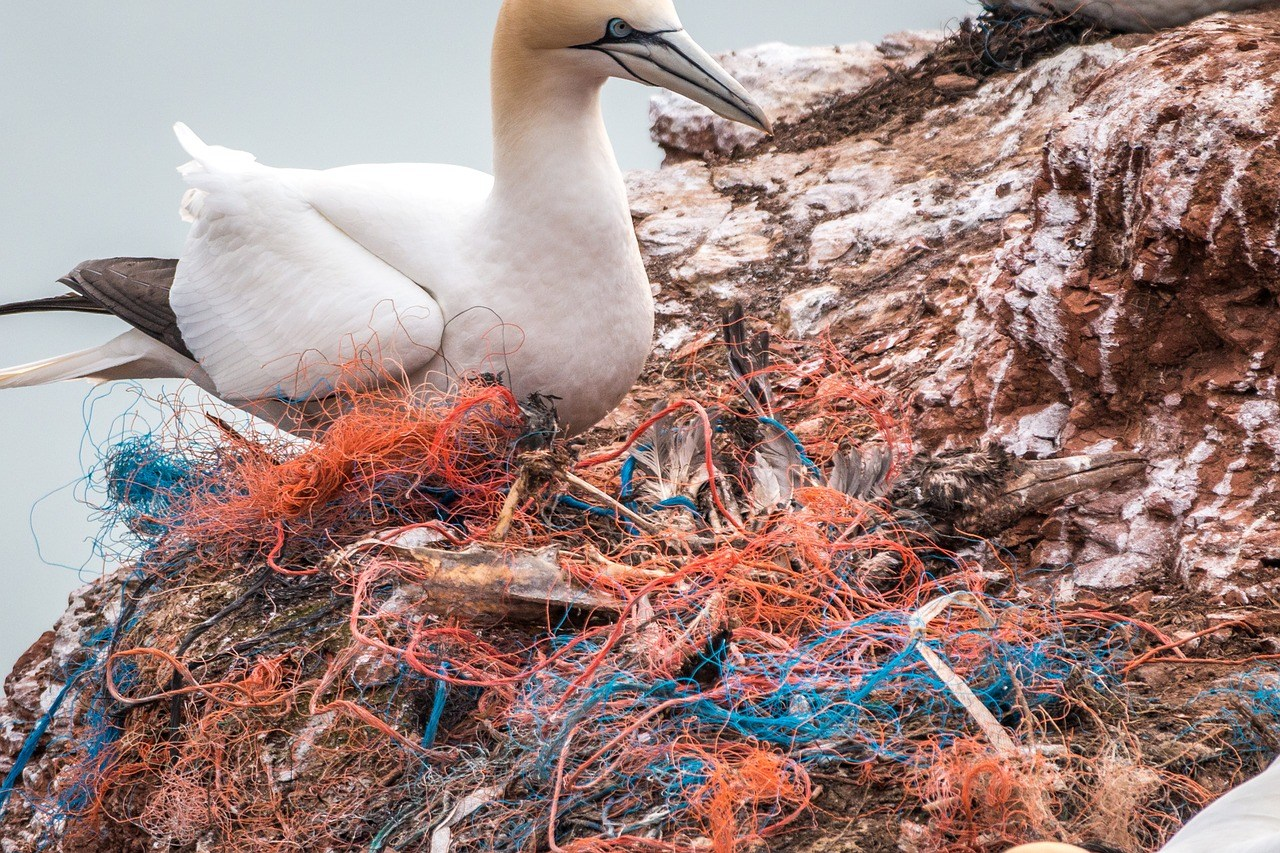 pollution-plastique-animaux-marins
